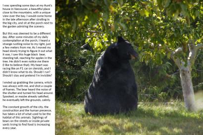 bear_vancouver.jpg